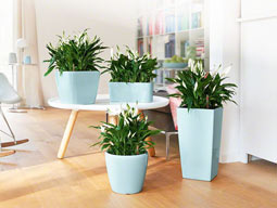 Озеленение офисных интерьеров