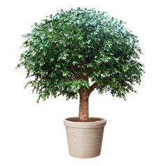 Искусственнные растения