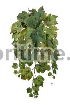 Лоза винограда зеленая