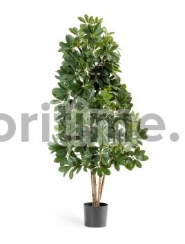 Шеффлера натуральная зеленая