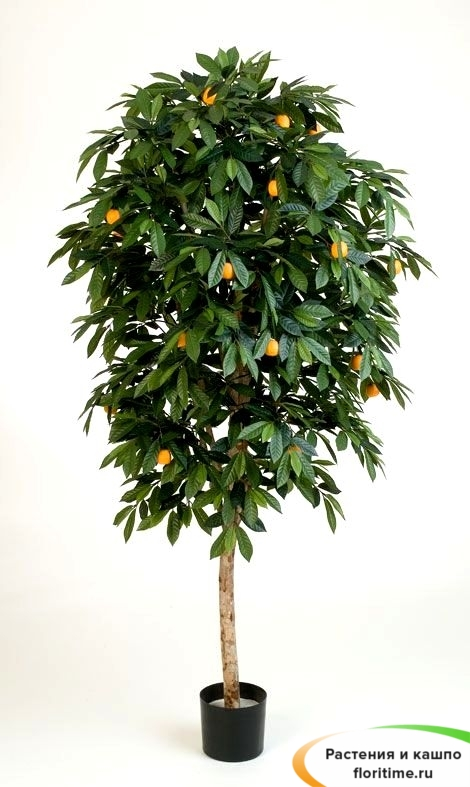 Мандарин Оранж