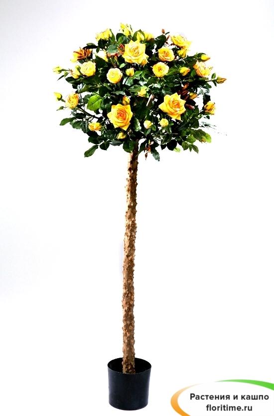 Роза Шар Штамбовая, желтая