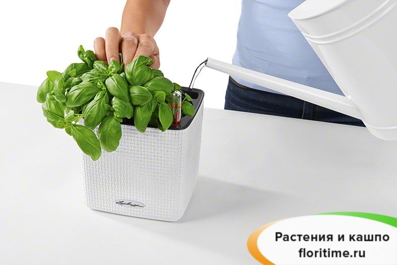 Кашпо Lechuza Cube Color, зелёный лайм