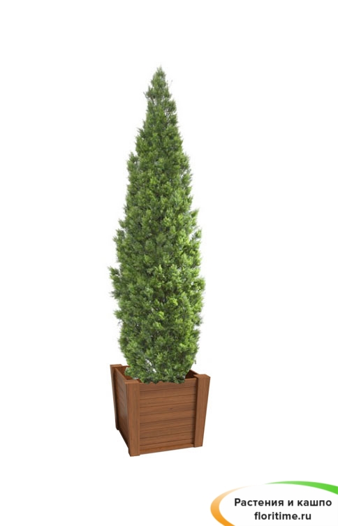 Кашпо Классика, дерево