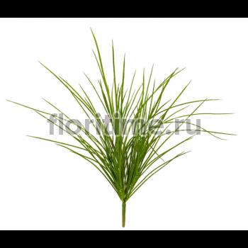 Трава Оньон куст