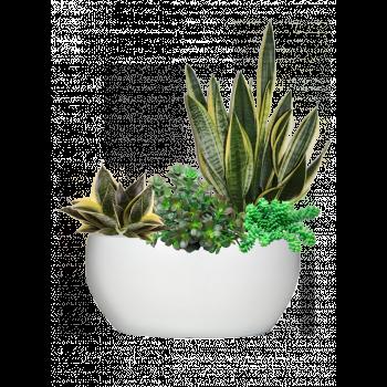 Сукуленты mix + Lux Чаша, белое