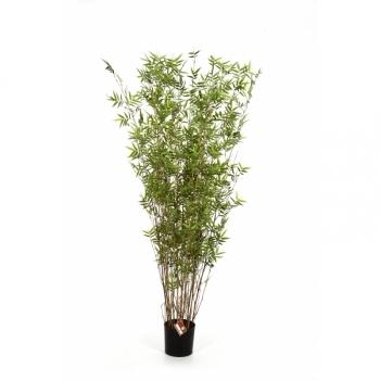 Бамбук Ориенталь