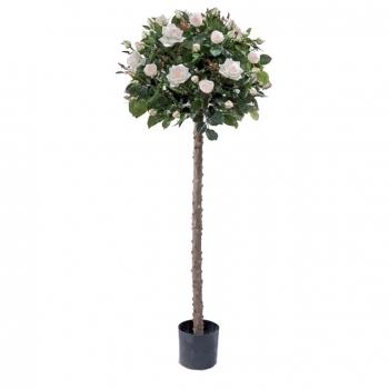 Роза Шар штамбовая, крем-нежно-розовая