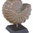 Скульптура Nautica verdigris bronze, бронзового цвета Длина — 19 см Диаметр — 31 см