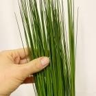Осока трава