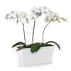 Орхидея Фаленопсис + DELTA 20