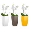 Орхидея Фаленопсис + MAXI-CUBI