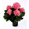 Гортензия Куст розовый