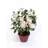 Роза нежно-розовая в кашпо