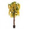 Вистерия Лиана с цветами, желтая