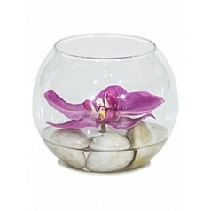 Композиция из искусственных растений orchid розовый light stones  Диаметр — 10 см