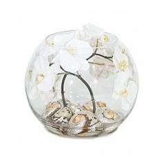 Композиция из искусственных растений orchid white, белого цвета shells turbo sermaticus  Диаметр — 30 см