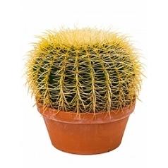 Эхинокактус grusonii 25 cm Диаметр горшка — 23 см Высота растения — 30 см