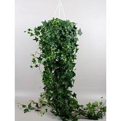 Плющ helix pittsburgh hanger groen Диаметр горшка — 24 см Высота растения — 100 см