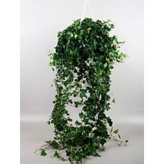 Плющ helix wonder hanger green Диаметр горшка — 24 см Высота растения — 100 см