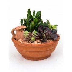 Plant arrangement sukkulenten planted dish with succulents Диаметр горшка — 19 см Высота растения — 20 см