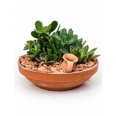 Plant arrangement sukkulenten planted dish with succulents Диаметр горшка — 23 см Высота растения — 20 см