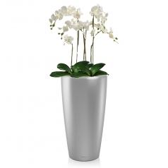 Орхидея Фаленопсис + RONDO 32
