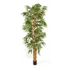 Бамбук Новый Гигантский Биг Лиф