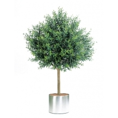 Оливковое дерево Топиари