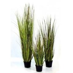Трава Бамбуковая