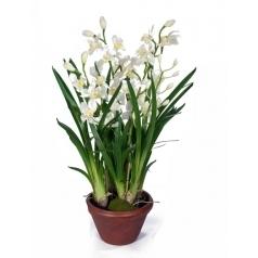 Орхидея Цимбидиум Белая в кашпо