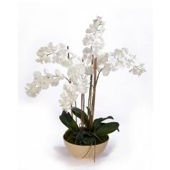 Орхидея Фаленопсис в кремовом кашпо