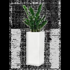 Замиокулкас + Lux Высокое прямоугольное, белое