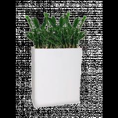 Замиокулкас + Lux Дивайдер высокий, белое