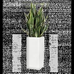 Сансевиерия + Lux Высокое прямоугольное, белое