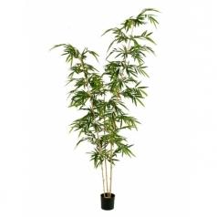 Бамбук Новый Элегант