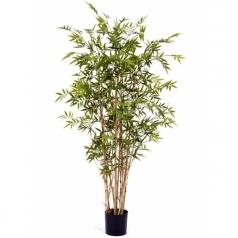 Бамбук Новый Японский Элегант