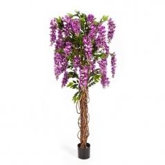 Вистерия Лиана с цветами, сиреневая
